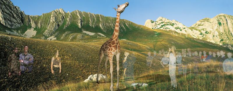 Window-Giraffe