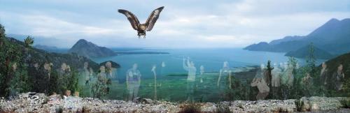 Windows-Eagle